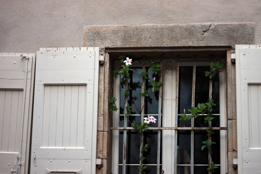 Exploring Lagrasse with Kids - flowering vine on French house with shutters
