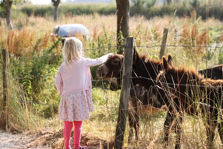 10 Things We've Learnt About Family Van Life - girl stroking donkey