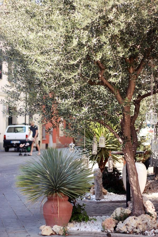 Olive tree - Exploring Brisighella With Kids