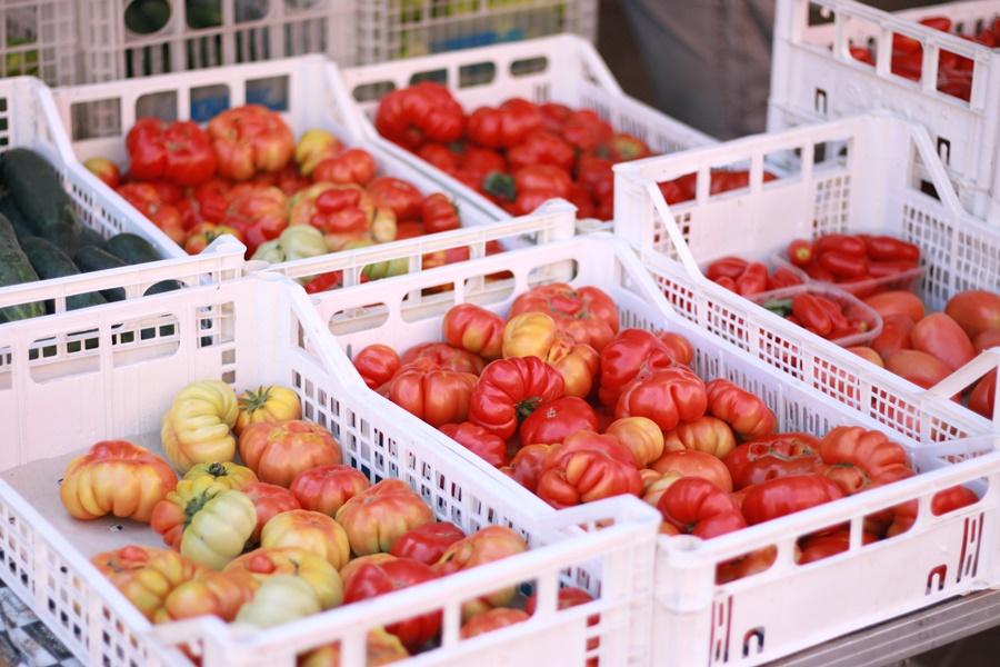 Heirloom tomatoes - Exploring Brisighella With Kids