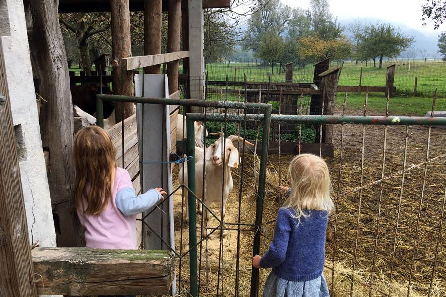 Feeding the goats at Pr' Krač Homestead in Slovenia