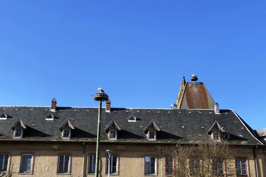 Stork nests in Munster, France - exploring Munster and finding storks