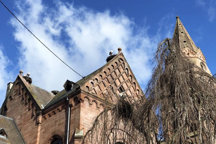 Stork nests on a church in Munster, France - exploring Munster and finding storks