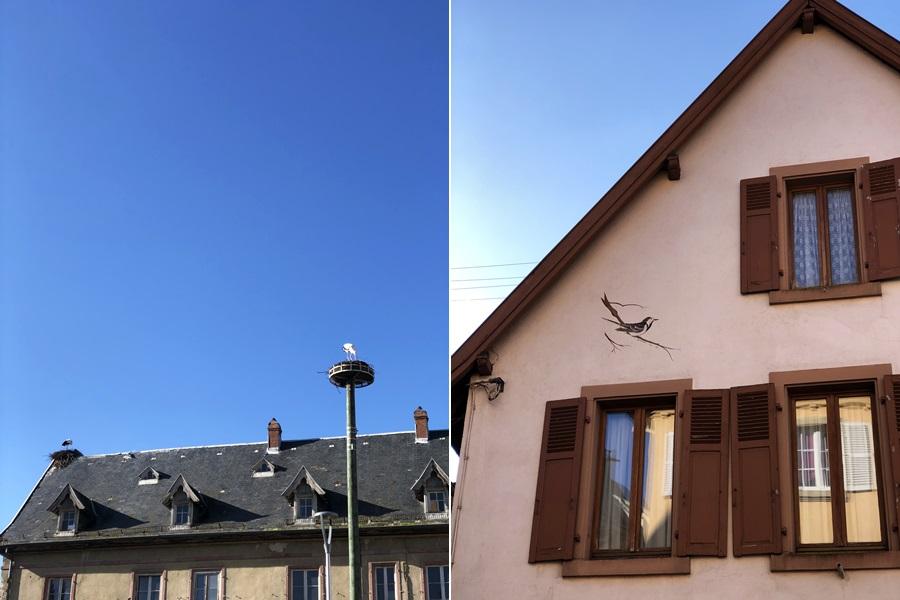 Nesting storks - exploring Munster and finding storks